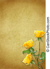 old paper background with beautiful roses