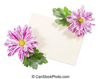 Old Paper with Chrysanthemum on white background. Lying...