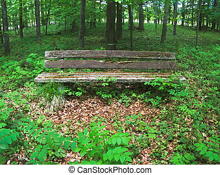 old park bench within a green forest