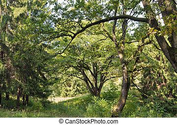 Old park close to Schonborn Castle. Chynadiyovo, Ukraine.