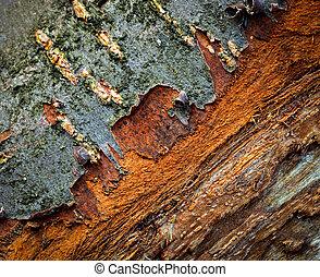 old peeled bark blackthorn