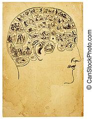 Old Phrenology Illustration - A vintage illustration from an...