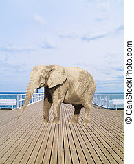 old pier with elephant