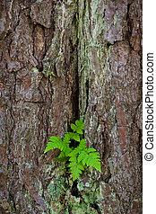 Old pine tree bark texture