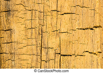 old plank with texture