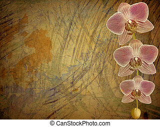 Old postcard for congratulation or invitation with a branch of pink orchids
