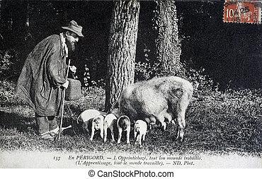 old postcard, Perigord truffles search