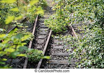 Old railway tracks overgrown with trees. Forgotten railway line.