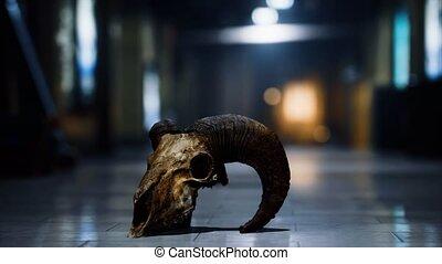 old ram skull in underground subway