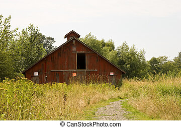 Old Red Barn in Weeds