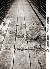 rickety bridge - old rickety bridge with thorns growing over...