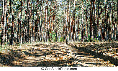 old road in a pine forest