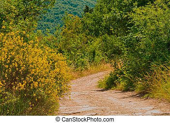 old road in the mountains