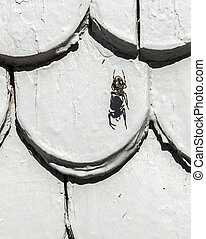 old roof tile structure with spider and shadow