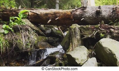 Old rotten log and mountain stream. Video with natural sound