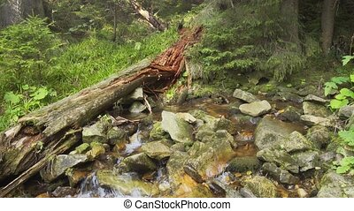 Old rotten log near a small river on a mountainside. Video with natural sound