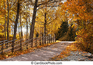 Old roundpole fence in autumn