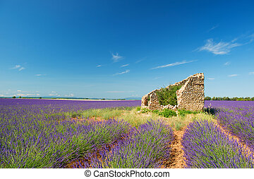 Old ruin in Lavender fields - Old broken house in French...