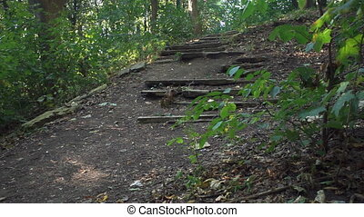 Old ruined staircase in the forest. Static camera