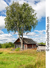 Old rural wooden house with big birch in russian village