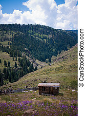 Old Rustic Wooden Shack in the Mountains of Colorado