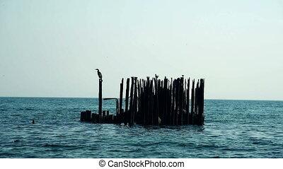 old rusty pier - Birds sit on old rusty pier in the sea
