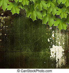 Old shabby cement wall with green branches of the maple