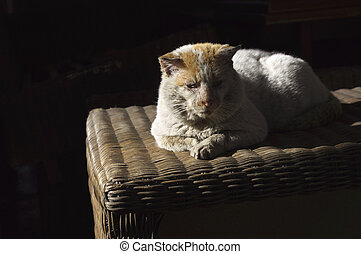 Old, shabby, homeless , stray cat resting in the sun 2