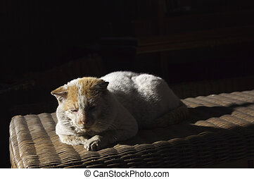 Old, shabby, homeless , stray cat resting in the sun 3