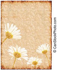 Old sheet of paper with daisy flowers on background