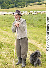 Old Sheperd near his flock - Old shepperd man with his dog...