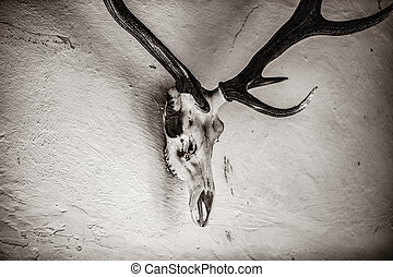 Old skull and antler on white wall in a castle