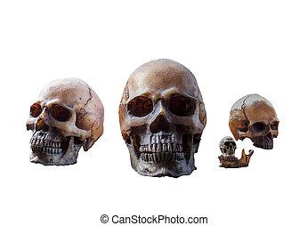 skull on a white background.