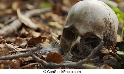 old skull on the ground covered with leaves closeup footage