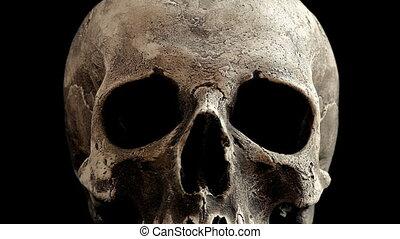 Old Skull Rotating Closeup Loop - Closeup of old human skull...