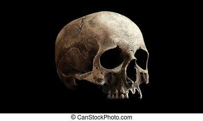 Old Skull Rotating Slowly Loop