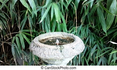 Old small fountain flows in abandoned east garden