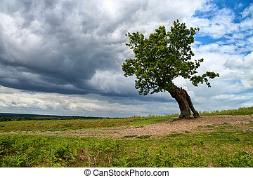 Old solitaire tree with dramatic sky