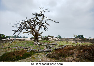 old special shaped dramatic dead tree in a sand-like nature