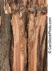 old split rotten wood texture background