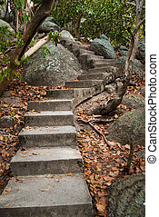 Old stairs and surrounding vegetation