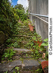 Old stairs with vegetation