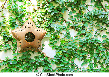 Old star hanging for decorated on ivy wall