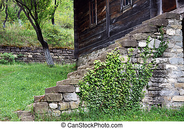 Old stone staeps with ivy plant