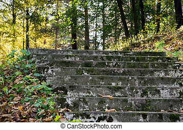 Old stone staircase in the forest