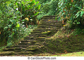 Old stone stairs in Ciudad Perdida (Lost City), Colombia -...