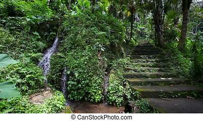 Old stone stairs in the jungle with a waterfall