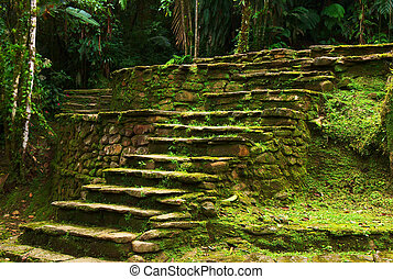 Old stone stairs leading to a terrace in Ciudad Perdida,...