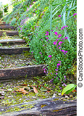 Old stone stairs with ivy