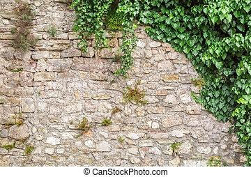 Old stone wall with ivy as background
